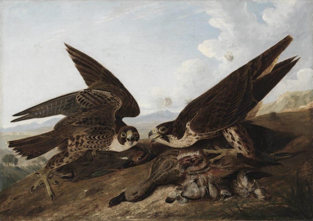 audubon-hawks